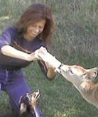 Animal Communicator Jane Broccolo
