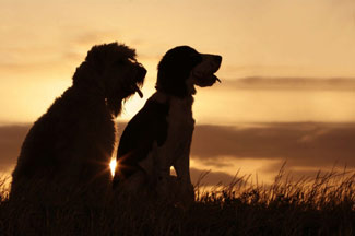dogs_sunset