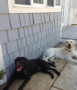 Leo und Emma - Alpha Dog